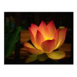 Lotus 1 postal