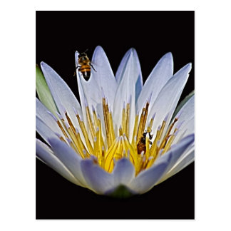 Lotus and bee meaning postcard