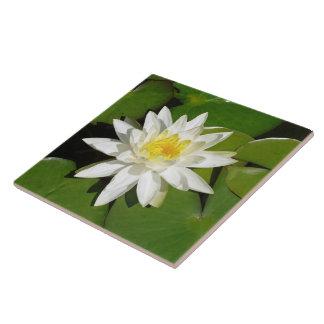 Lotus blanco azulejo cuadrado grande