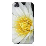 Lotus blanco iPhone 4 carcasas
