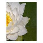 Lotus blanco plantilla de membrete