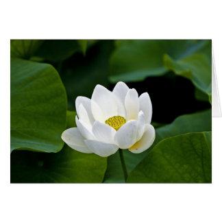 Lotus blanco tarjeta de felicitación