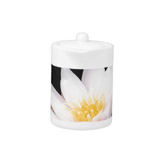 Lotus blanco