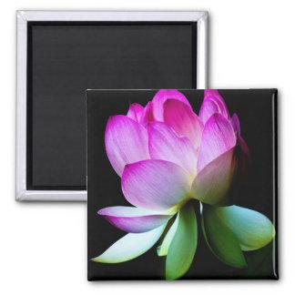 Lotus Bloom Magnets