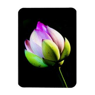 Lotus Bloom Magnet