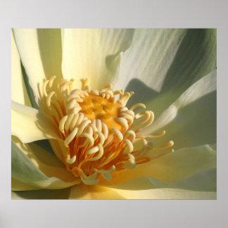 Lotus Blossom Photo Poster Print