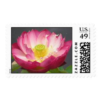 Lotus blossom stamp