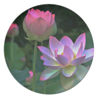 Lotus blossoms plates