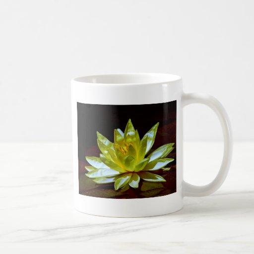 Lotus colorido tazas de café
