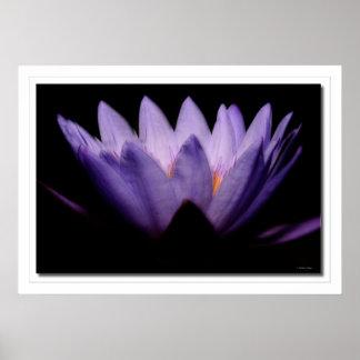 Lotus Dawn Posters