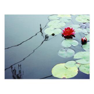 Lotus en el agua tarjetas postales