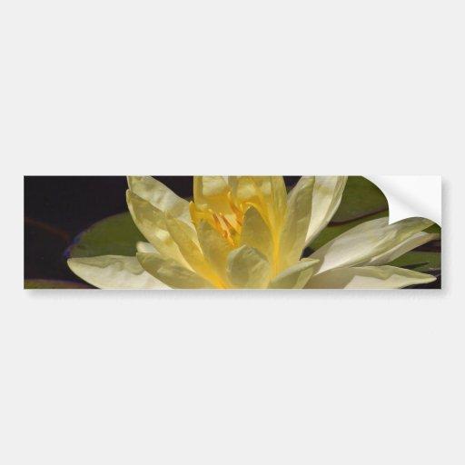 Lotus en la charca reflectora en parque del balboa pegatina de parachoque