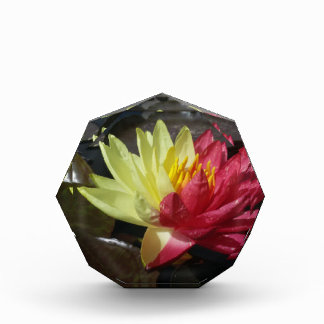 Lotus Flower Acrylic Award