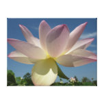 Lotus Flower and Blue Sky II Nature Photography Canvas Print