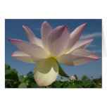 Lotus Flower and Blue Sky II Nature Photography Card