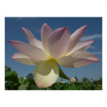 Lotus Flower and Blue Sky II Nature Photography Poster