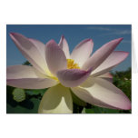 Lotus Flower and Blue Sky III Nature Photography Card