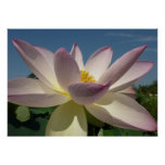 Lotus Flower and Blue Sky III Nature Photography Poster