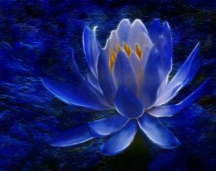 Blue Lotus Posters Photo Prints Zazzle