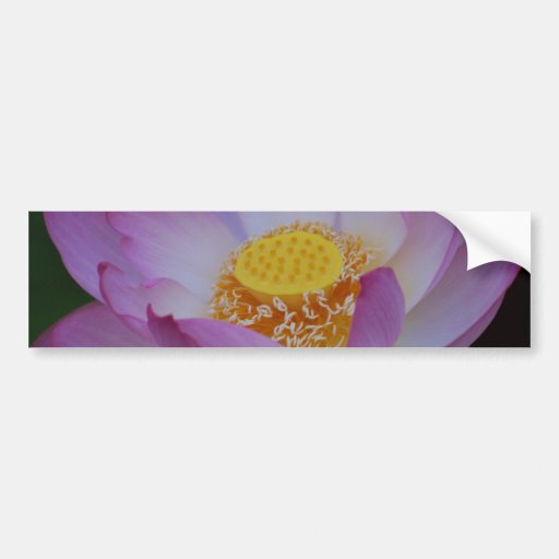 Lotus flower and its meaning car bumper sticker