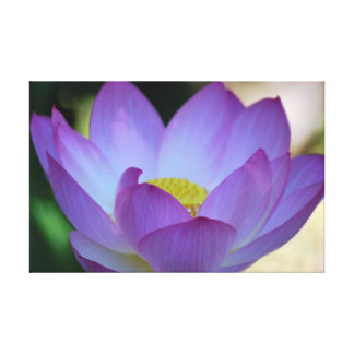 Lotus flower and its meaning gallery wrap canvas