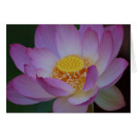 Lotus flower and its meaning greeting cards