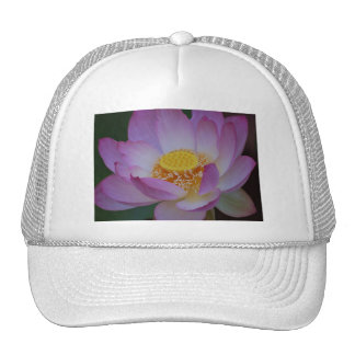 Lotus flower and its meaning hats