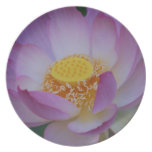Lotus flower and its meaning party plate