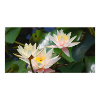 Lotus flower and meaning card