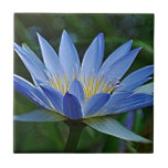 Lotus flower and meaning ceramic tiles