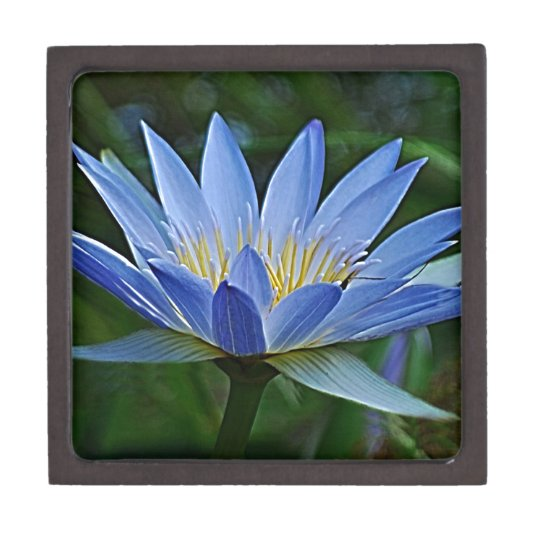 Lotus flower and meaning jewelry box