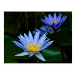 Lotus flower and meaning postcards