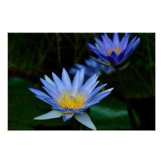 Lotus flower and meaning poster