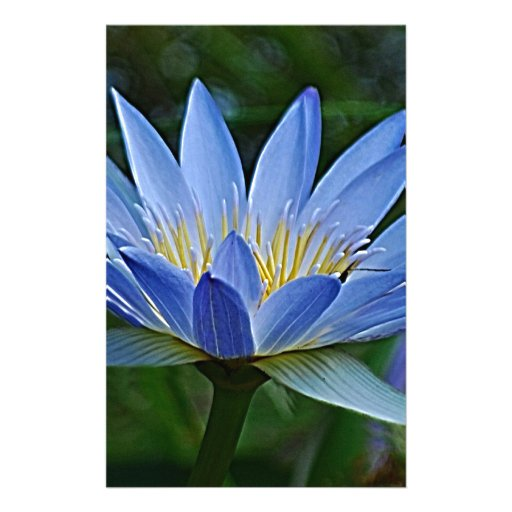 Lotus flower and meaning stationery paper