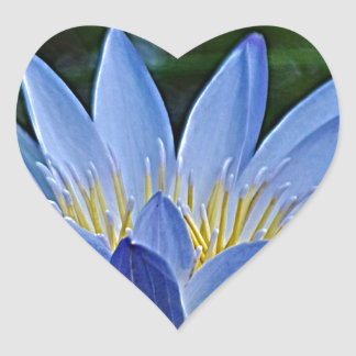 Lotus flower and meaning heart sticker
