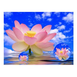 Lotus Flower Born in Water Postcard