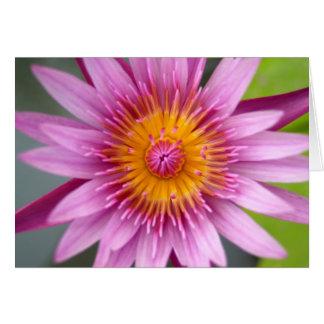 lotus  flower card