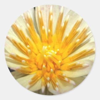 lotus  flower classic round sticker