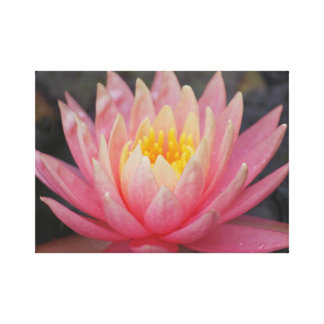 Lotus flower for Mothers Day Stretched Canvas Print