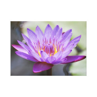 Lotus flower for Mothers Day Gallery Wrapped Canvas