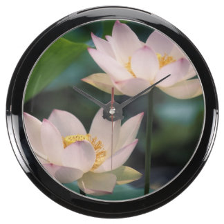 Lotus flower in blossom, China Aquavista Clocks