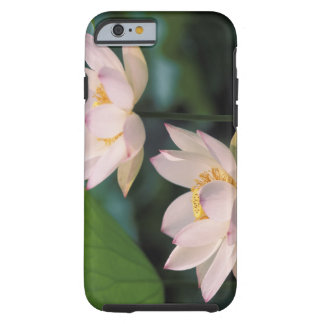 Lotus flower in blossom, China Tough iPhone 6 Case
