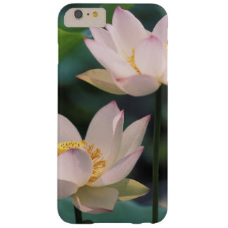 Lotus flower in blossom, China Barely There iPhone 6 Plus Case