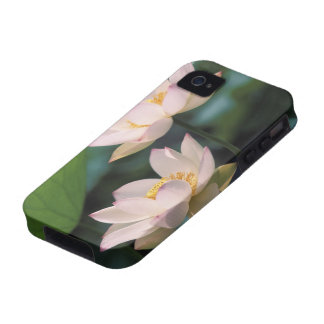 Lotus flower in blossom, China iPhone 4/4S Case