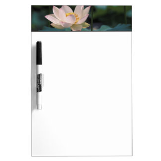 Lotus flower in blossom, China Dry Erase Boards