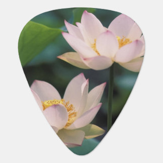 Lotus flower in blossom, China Guitar Pick