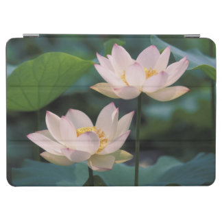 Lotus flower in blossom, China iPad Air Cover