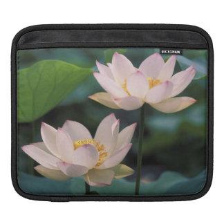 Lotus flower in blossom, China iPad Sleeve