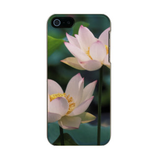 Lotus flower in blossom, China Incipio Feather® Shine iPhone 5 Case