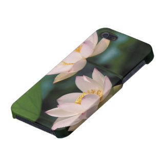 Lotus flower in blossom, China iPhone SE/5/5s Cover